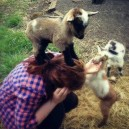 Evil Goat Hostage Situation