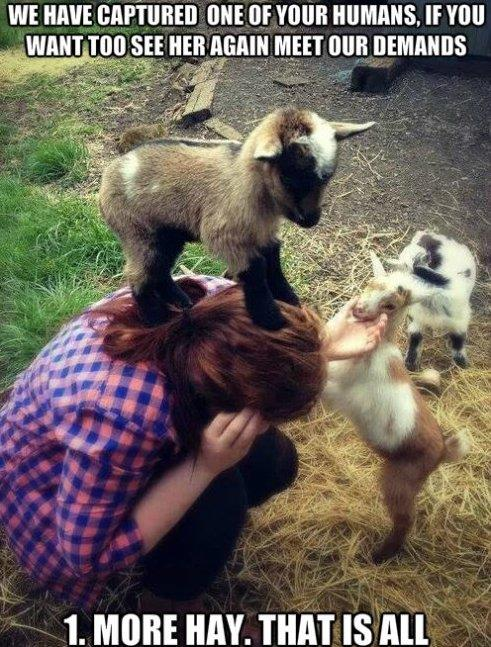 Evil Goat Hostage Situation