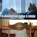 I Should Become A Ninja