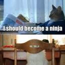 I Should Become A Ninja
