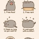 Reasons You Should Consider Being A Cat