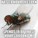 Scumbag Fly