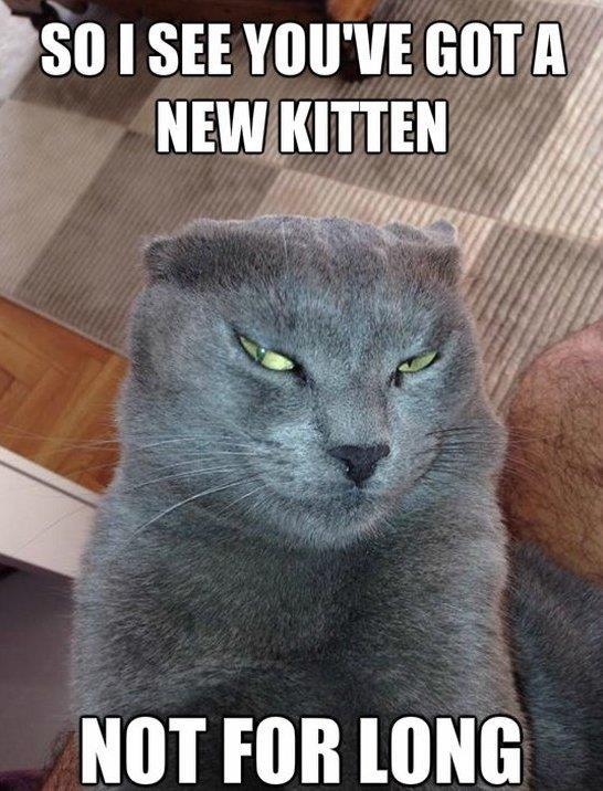 Devious Cat