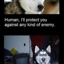 Dogs, our protector