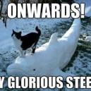 Glorious Cat