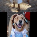 Hilarious Dogs In Costumes