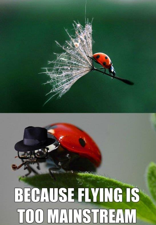 Hipster Ladybug