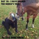 Horse Logic