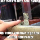 Lizard In Jail