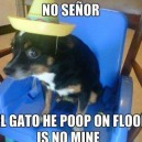 No Senor