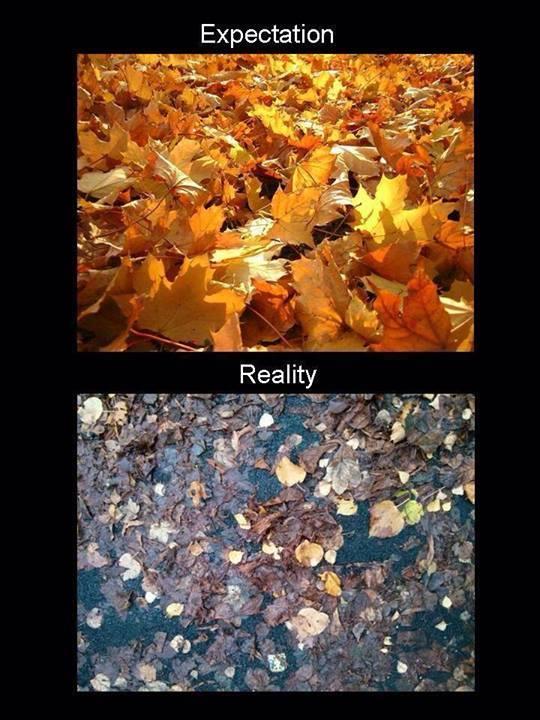 Scumbag Autumn