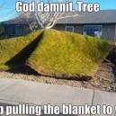 Selfish Tree