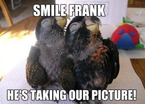 Smile Frank