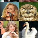 Birds Looks Like Celebirties