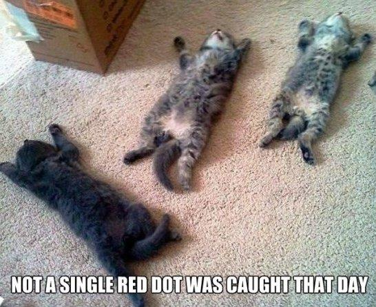 Cats be like