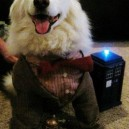 Doctor Woof