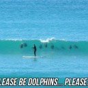Let There Be Dolphins
