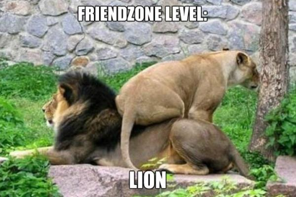 Poor Lion