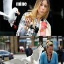 Scumbag Seagull