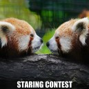 Staring contest