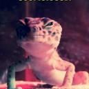 Suspiciously Happy Lizard