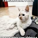 Wasn't me!