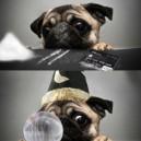 Dogoshop