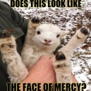 Face of mercy