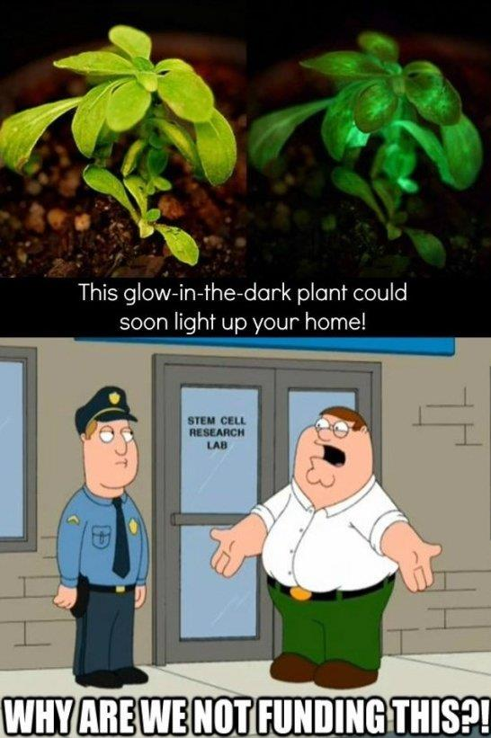 Glow In The Dark Plant