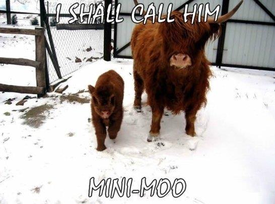 Mini Moo