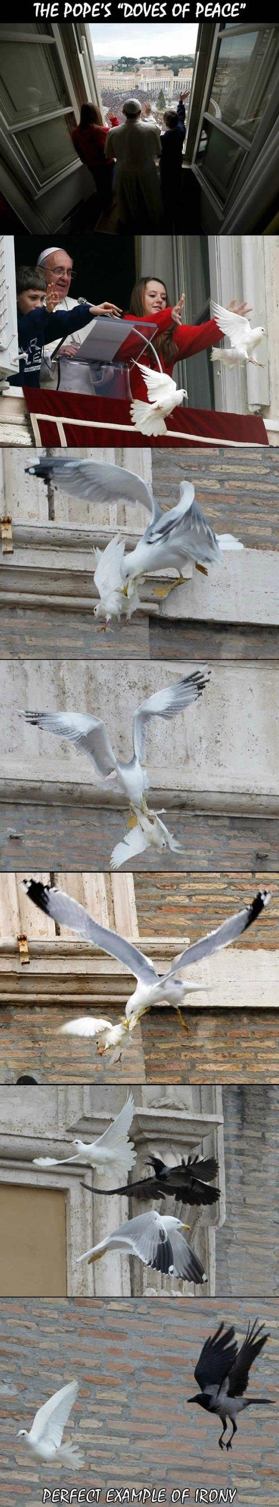 Popes dove of peace