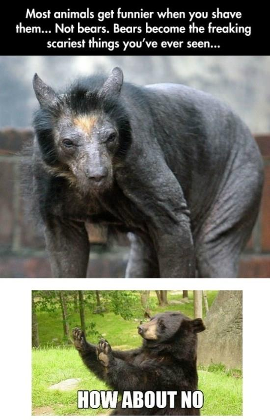 Shaved Bear