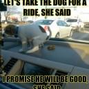 Stop it dog!