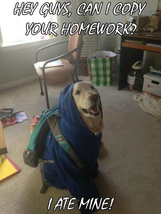 Student Dog