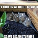 Turnip Bunnies