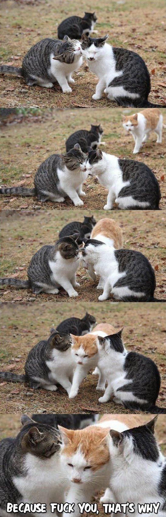 Bitter Kitten