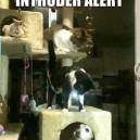 Intruder alert!