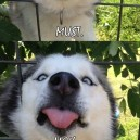 Must lick face