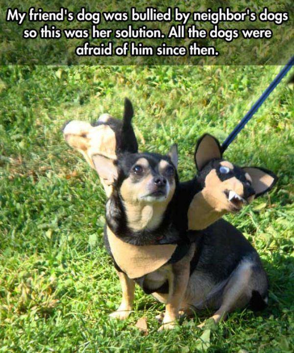 Bullied dog