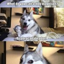 Dog magician