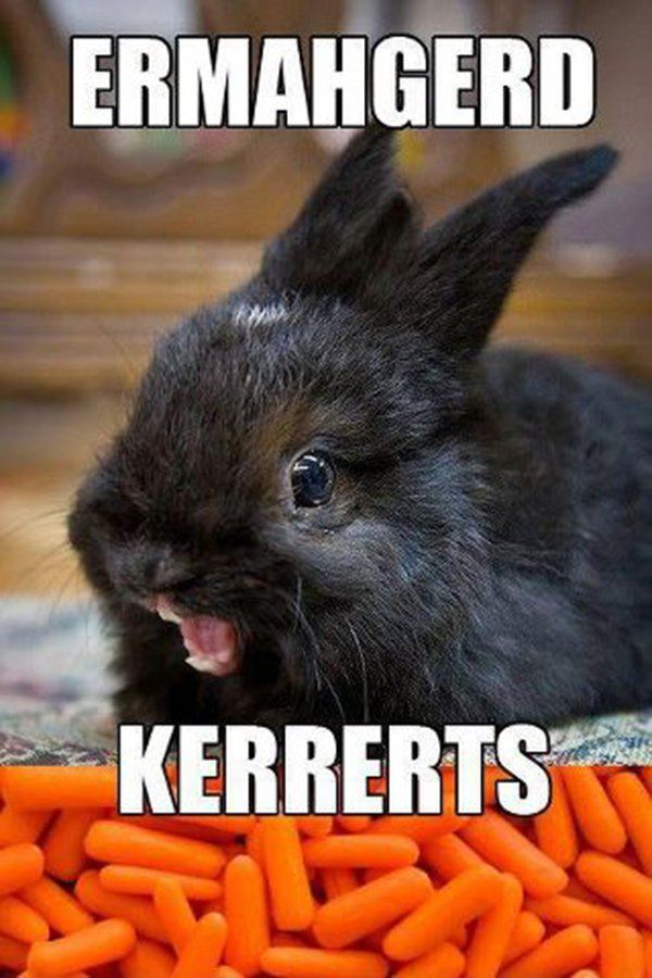 Ermagerd Bunny