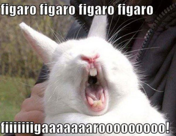 Figaroooo