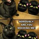 Hahaha! You so funny!