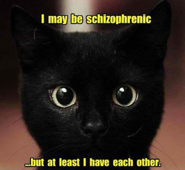 Schizophrenic cat