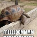 The Great Turtle Escape
