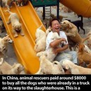 Buy All The Dogs!