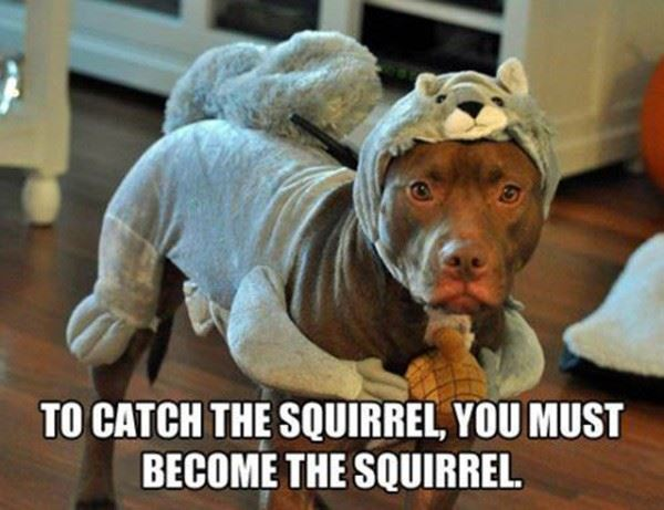 Catch the Squirrel