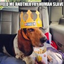 Feed Me Human