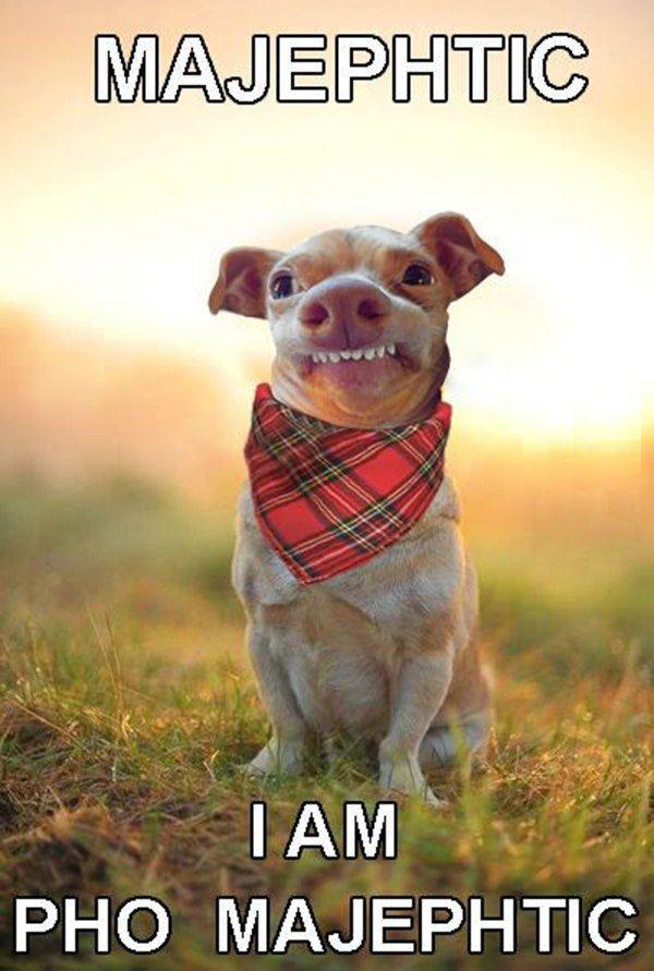Majephtic Dog
