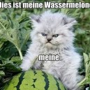 Mein Watermelon